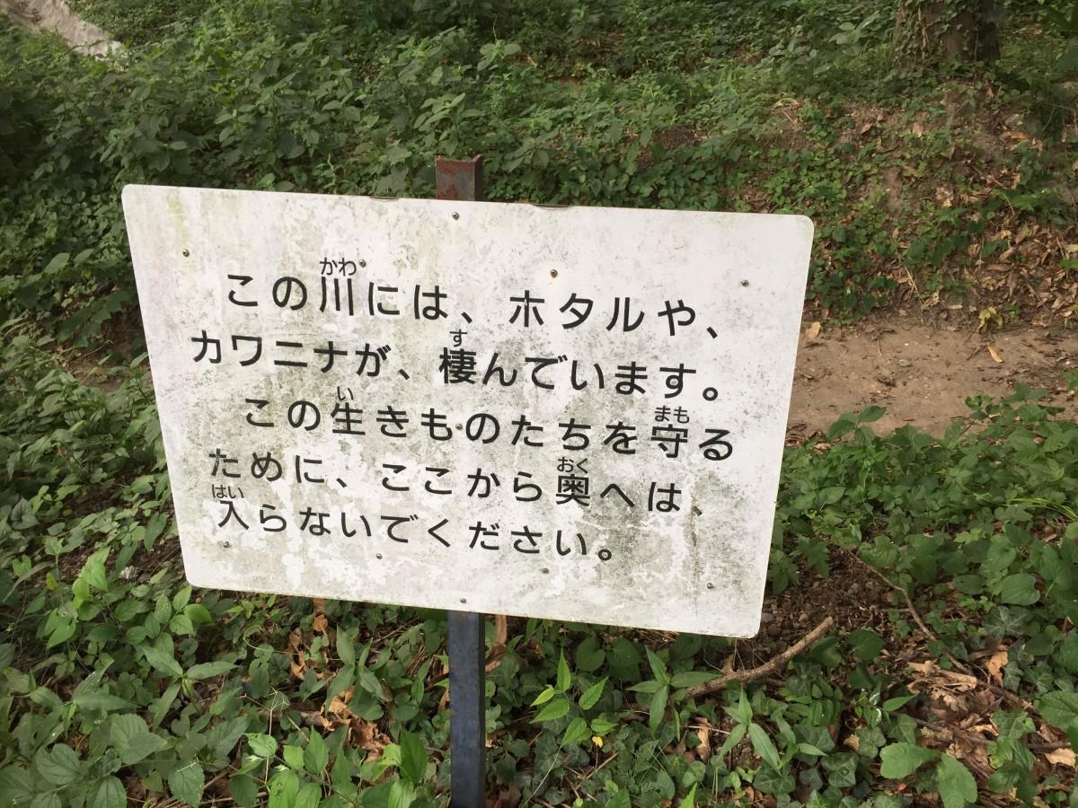 【桶川市】 富士見ホタル親水公園 ホタル鑑賞会 現在はやっている?