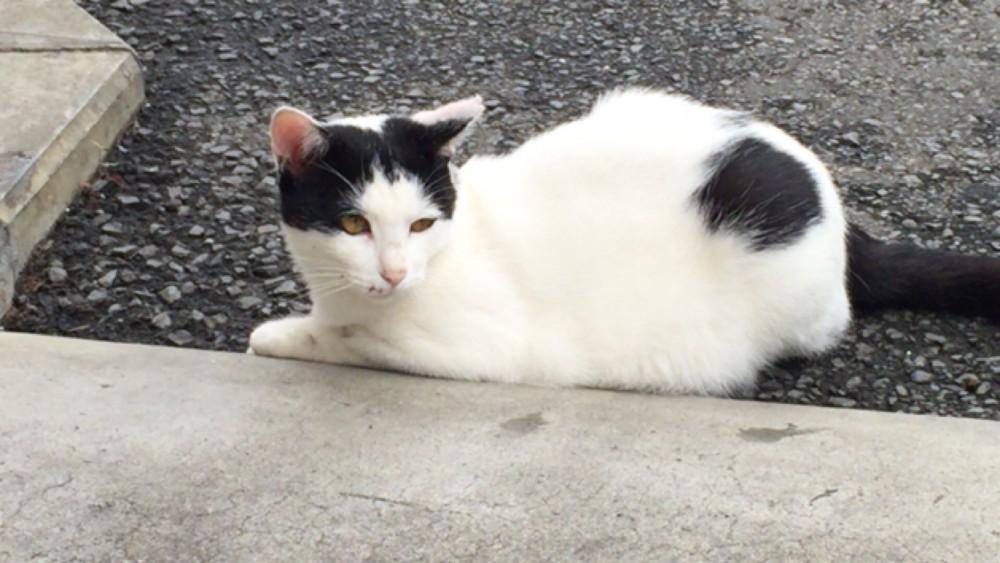 和の花 白い猫 かわいい