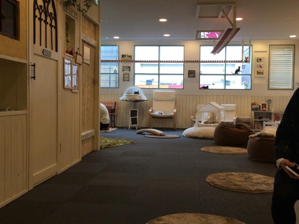 ネコカフェ「猫家 ねこや」は最高の癒しスポット【川越市 クレアモール商店街内】
