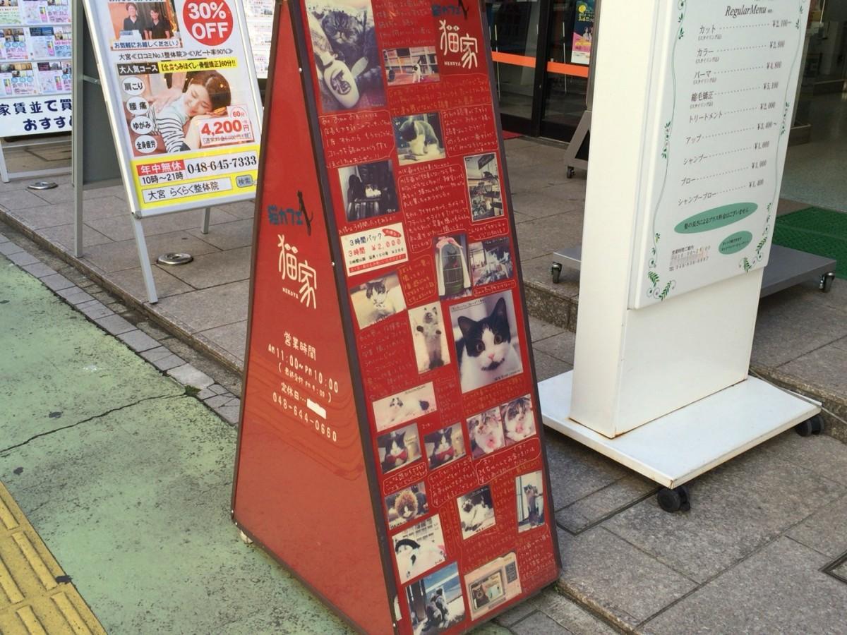 大宮駅 東口のネコカフェ「猫家 ねこや 」の感想【さいたま市大宮区】