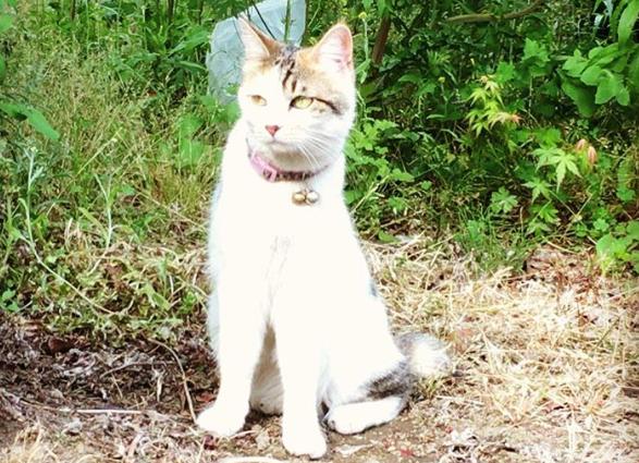 埼玉県で出会った、可愛い猫(ネコ)の画像 まとめ